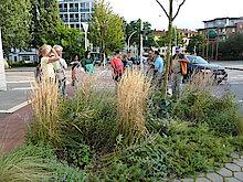Rotahorn vor dem SDZ mit Blumenbeet (Foto Gisela Baudy)