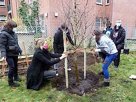 Festbinden des Baumes (Foto Gisela Baudy)