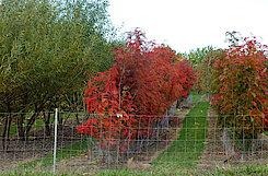 """Blick auf die """"verschulten"""" Bäume (Gisela Baudy)"""