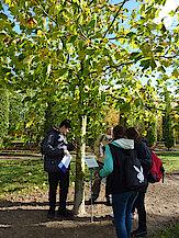Quizgruppe vor Platane (London Plane) (Foto Gisela Baudy)